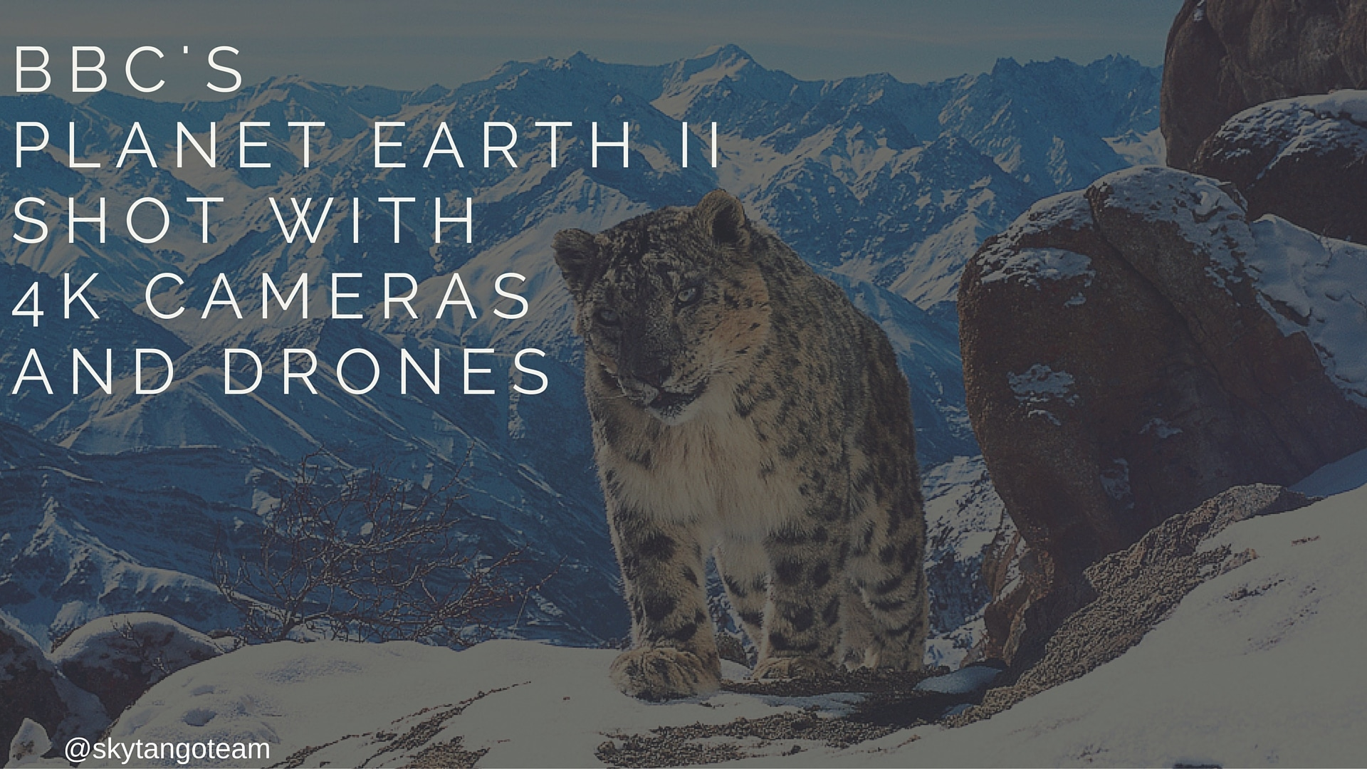 BBC's Planet Earth II Shot With 4K Cameras And Drones