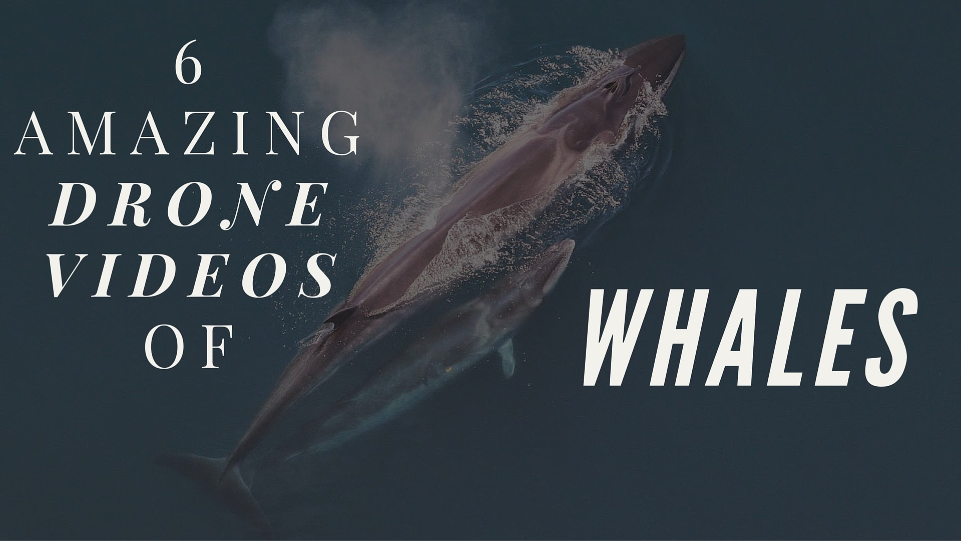 6 Amazing Drone Videos Of Whales