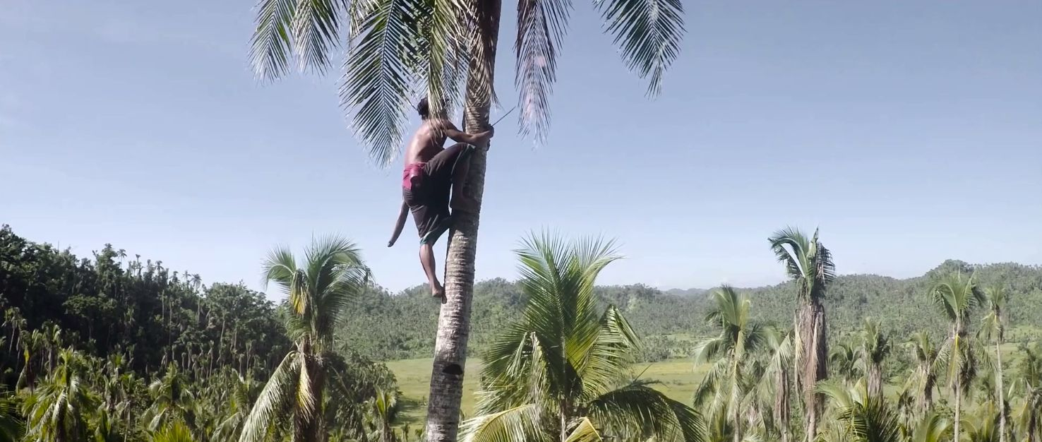 Danny Cooke's Showreel - Coconut trees climbing
